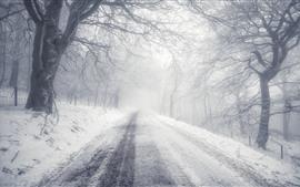 Inverno, estrada, neve, árvores, manhã, névoa