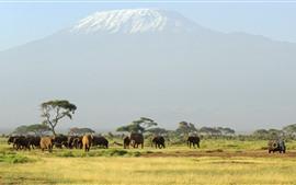Aperçu fond d'écran Afrique, un troupeau d'éléphants