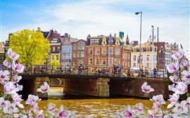 Preview wallpaper Amsterdam, bridge, river, spring, pink flowers