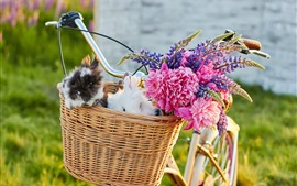 Preview wallpaper Bike, basket, rabbits, flowers