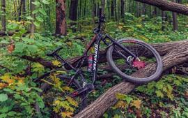 Bicicleta, arbol, bosque