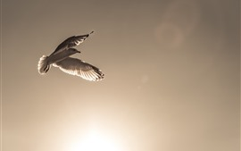 Preview wallpaper Bird, flight, wings, sky, sunshine