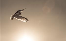 Птица, полёт, крылья, небо, солнце