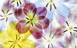 Azul, rosa, flores amarelas, pétalas