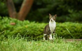 Aperçu fond d'écran Regard de chat, herbe verte, nature