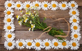 Preview wallpaper Chamomile, daisy, white flowers