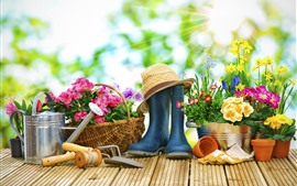 Colorful flowers, garden, kettle, hat, sun rays