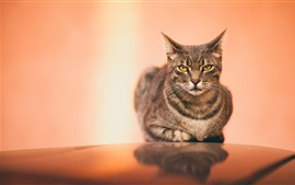Preview wallpaper Cute gray cat, rest, face, look