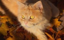 Preview wallpaper Cute kitten, furry cat, yellow eyes