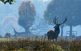 Veado, floresta, nevoeiro
