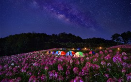 Flowers, tents, night, starry