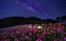 Fleurs, tentes, nuit, étoilé