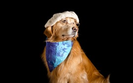 Preview wallpaper Funny dog, hat, glasses, scarf