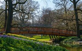 Германия, Карлсруэ, парк, деревья, мост, река, весна
