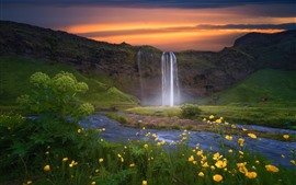 Iceland, sunset, flowers, waterfall