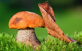 Preview wallpaper Mushroom, dry leaf, green grass