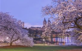 Preview wallpaper New York, park, sakura bloom, dusk, lake, spring