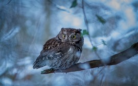 Preview wallpaper Owl, tree branch, hazy