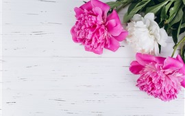 Preview wallpaper Pink and white peonies