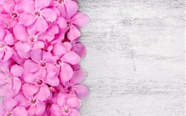 Preview wallpaper Pink petals flowers, wood board