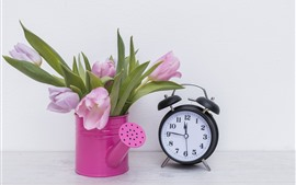 Pink tulips and alarm clock