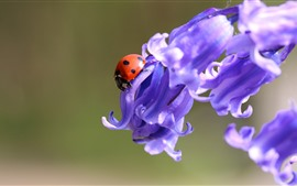 Фиолетовые цветы, божья коровка