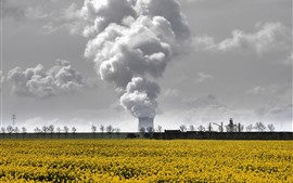 Smoke, factory, yellow flowers