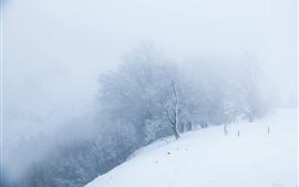 Neve, mundo branco, árvores, nevoeiro, manhã, inverno