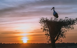 Preview wallpaper Stork, nest, bird, silhouette, sunset
