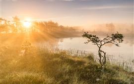 미리보기 배경 화면 태양 광선, 나무, 잔디, 연못, 아침, 안개