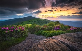 Sunset, mountains, green, flowers, clouds, dusk