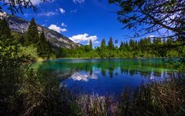 Suíça, árvores, lago, verde, verão