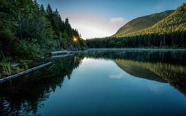 木、森、湖、太陽光線、朝