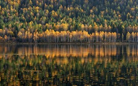 Preview wallpaper Trees, forest, river, water reflection, autumn