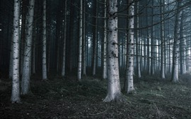 Preview wallpaper Trees, nature landscape, fog, forest