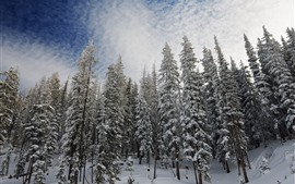 Preview wallpaper Winter, snow, forest, trees, white clouds, sky