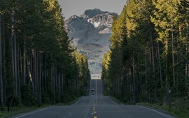 Yellowstone National Park, road, forest, mountains, USA