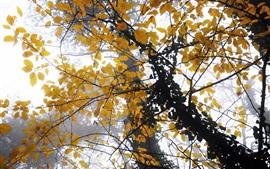 Осень, желтые листья, туман, деревья, утро