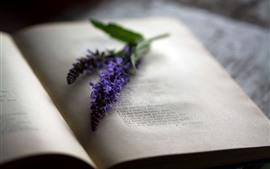 Book, purple flowers