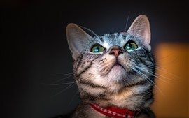Preview wallpaper Cat look up, green eyes, cute pet