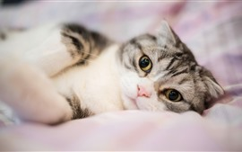 Preview wallpaper Cute cat look at you, bed, hazy
