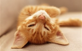 Cute kitten sleeping, look