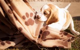 Filhote de cachorro bonito, cobertor