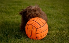 Preview wallpaper Dog and orange ball, grass