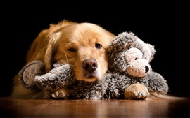 Preview wallpaper Dog and toy bear, black background