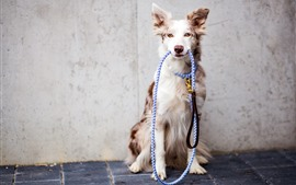 Preview wallpaper Dog, rope, pet