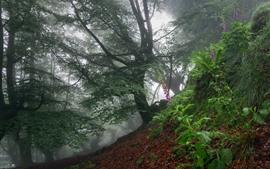 Bosque, árboles, flores rosadas, niebla