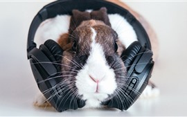 Preview wallpaper Funny pet, rabbit and headphones