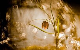Herbe, fleur, eau, rayons du soleil, brouillard