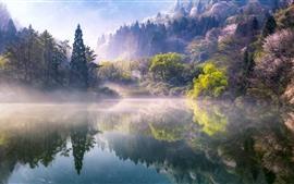Preview wallpaper Morning, trees, lake, fog, nature scenery